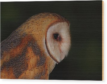 Barn Owl Profile Wood Print