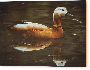 Wood Print featuring the photograph Beautiful Rust Goose by The 3 Cats