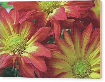 Wood Print featuring the photograph Beautiful Trio by Allen Beatty