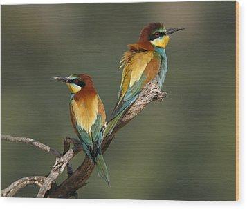 Bee-eater Wood Print by Perry Van Munster