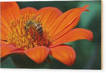 Wood Print featuring the photograph Bee-utiful by Debbie Karnes