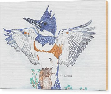 Belted Kingfisher Wood Print by Don  Gallacher