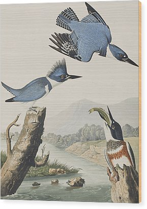 Belted Kingfisher Wood Print by John James Audubon