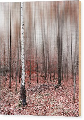 Wood Print featuring the photograph Birchforest In Fall by Hannes Cmarits