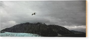 Wood Print featuring the photograph Bird Over Glacier - Alaska by Madeline Ellis