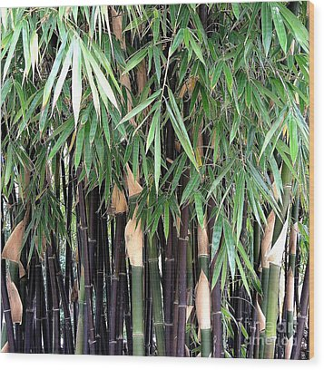 Black Bamboo Wood Print by Mary Deal
