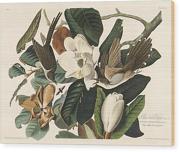 Black-billed Cuckoo Wood Print by Rob Dreyer
