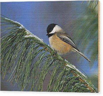 Black-capped Chickadee Wood Print