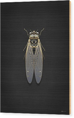 Black Cicada With Gold Accents On Black Canvas Wood Print by Serge Averbukh