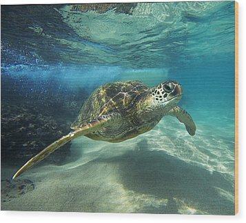 Black Rock Turtle Wood Print by James Roemmling