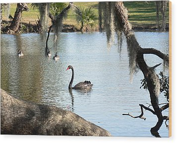 Black Swan Wood Print by Elizabeth Fontaine-Barr