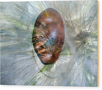 Blowing Dandelions Wood Print by Irma BACKELANT GALLERIES