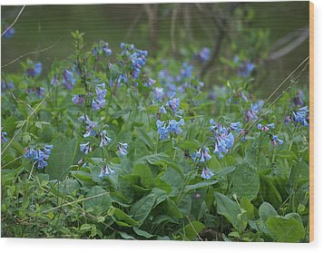 Blue Bells Wood Print by Heidi Poulin