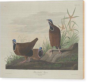 Blue-headed Pigeon Wood Print