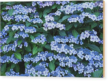 Wood Print featuring the photograph Miksang 12 Blue Hydrangea by Theresa Tahara