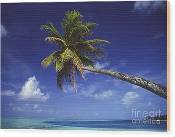 Bora Bora, Palm Tree Wood Print by Ron Dahlquist - Printscapes
