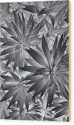 Botanical Wood Print by Wayne Sherriff