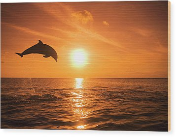 Bottlenose Dolphin (tursiops Truncatus) Jumping Out Of Water, Sunset Wood Print by Rene Frederick
