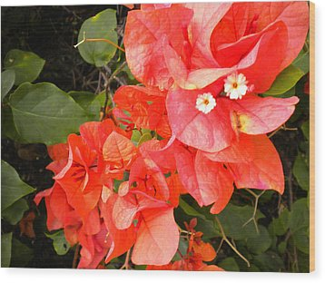Bouganvilla 1 Wood Print