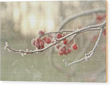 Branches With Early Winter Frost With Red Berries Wood Print by Sandra Cunningham