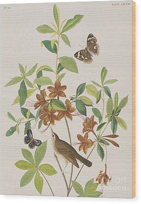 Brown Headed Worm Eating Warbler Wood Print by John James Audubon