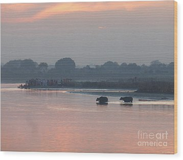 Wood Print featuring the photograph Buffalos Crossing The Yamuna River by Jean luc Comperat