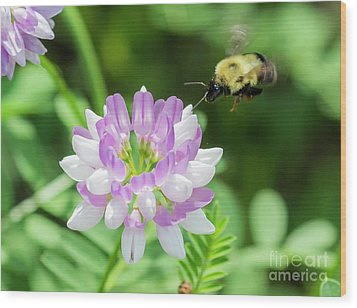 Bumble Bee Pollinating A Flower Wood Print