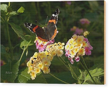 Busy Butterfly Side 2 Wood Print by Felipe Adan Lerma