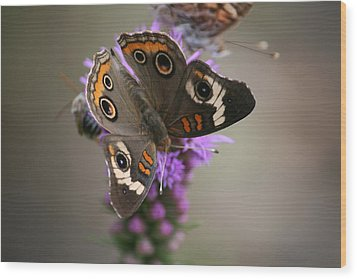 Wood Print featuring the photograph Buckeye Butterfly by Cathy Harper