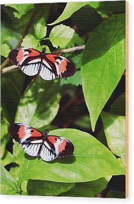 Butterflies Wood Print by Sandy Taylor