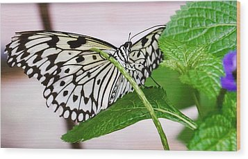 Paper Kite Butterfly No. 1 Wood Print