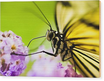 Butterfly Wood Print by Sebastian Musial