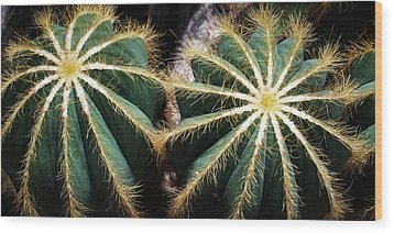 Cactus  Wood Print by Catherine Lau