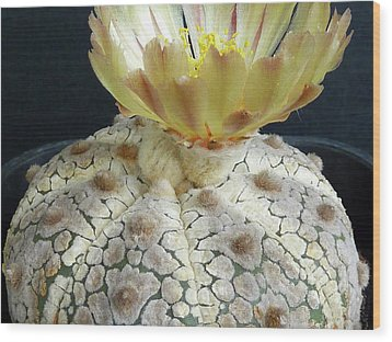 Cactus Flower 1 Wood Print by Selena Boron