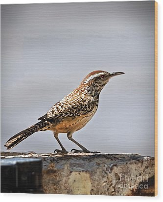 Wood Print featuring the photograph Cactus Wren by Robert Bales
