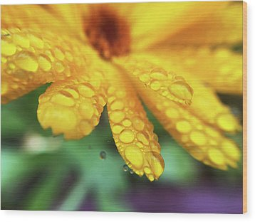 Calendula Officinalis Wood Print