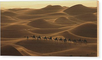 Camel Caravan In The Erg Chebbi Southern Morocco Wood Print