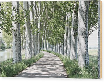Canal Du Midi Wood Print by Cendrine Marrouat