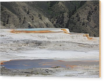 Canary Spring At Mammoth Hot Springs Upper Terraces Wood Print by Louise Heusinkveld