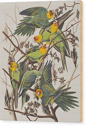 Carolina Parrot Wood Print by John James Audubon