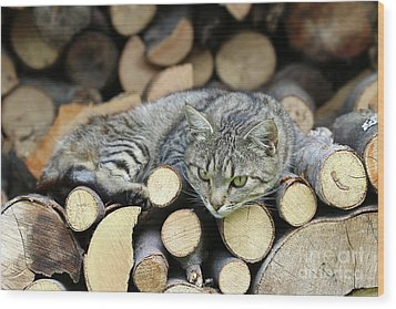 Wood Print featuring the photograph Cat Resting On A Heap Of Logs by Michal Boubin