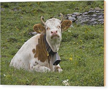 Cattle, Switzerland Wood Print by Bob Gibbons