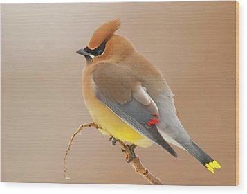 Cedar Wax Wing Wood Print