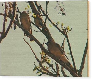 Cedar Waxing Wood Print by Nereida Slesarchik Cedeno Wilcoxon