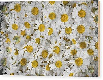 Chamomile Flowers Wood Print by Elena Elisseeva