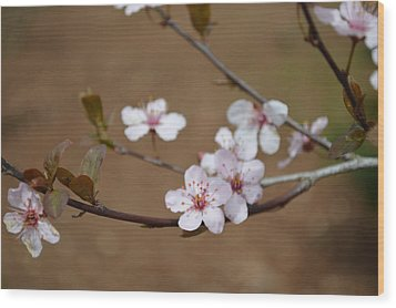 Wood Print featuring the photograph Cherry Blossoms by Linda Geiger