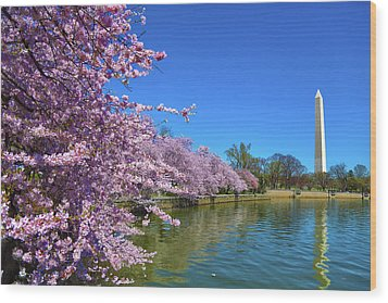 Wood Print featuring the photograph Cherry Blossoms by Mitch Cat
