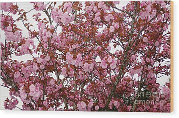 Wood Print featuring the photograph Cherry Blossoms  by Victor K