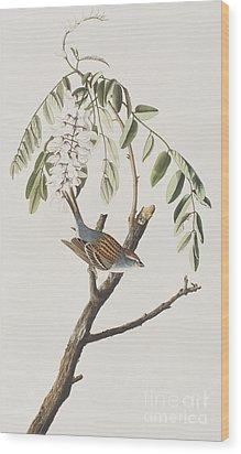 Chipping Sparrow Wood Print by John James Audubon