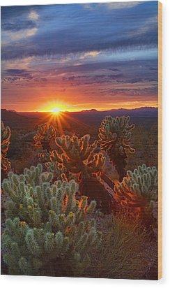 Cholla Sunset  Wood Print